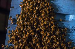 美男子吸毒成瘾竟偷老板91公斤蜂蜡筹钱