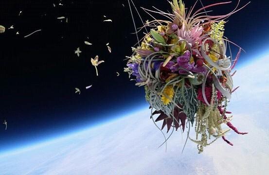 日本园艺家将盆栽送上太空边缘拍下别样美照