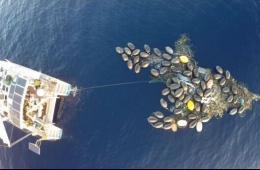 """日本311海啸废弃物在海洋中渐成""""垃圾岛"""""""