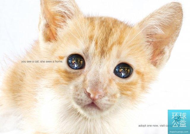 互动公益广告:你看见一只猫,它看见一个家