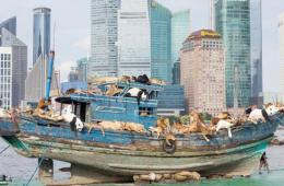 中国艺术家99只动物共乘渔船 关注环境议题