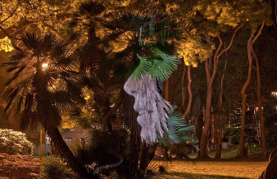 个性 戴维/澳摄影师树木上投射名人肖像拍个性照(3/12)
