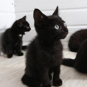 """英国人因""""不上相""""遗弃黑猫"""