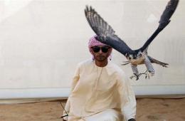 """阿联酋将举行全球""""最美、最大猎鹰""""评选活动"""