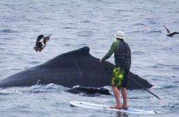 美国 近距离/美国冲浪者胆大包天近距离调戏座头鲸