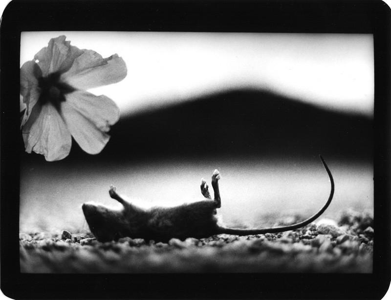 观念摄影:动物的黑白瞬间