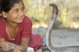 印度11岁女孩与眼镜王蛇同食同寝