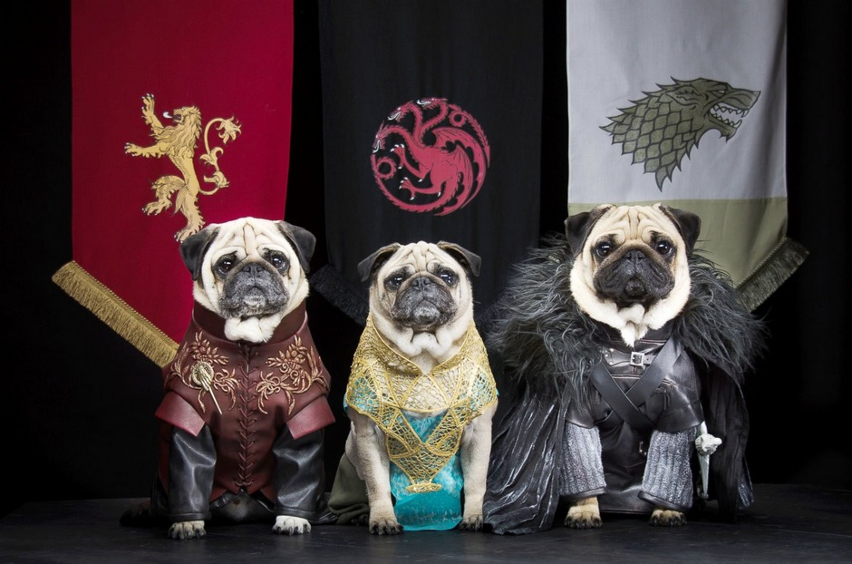动物摄影:沙皮狗的权利和游戏