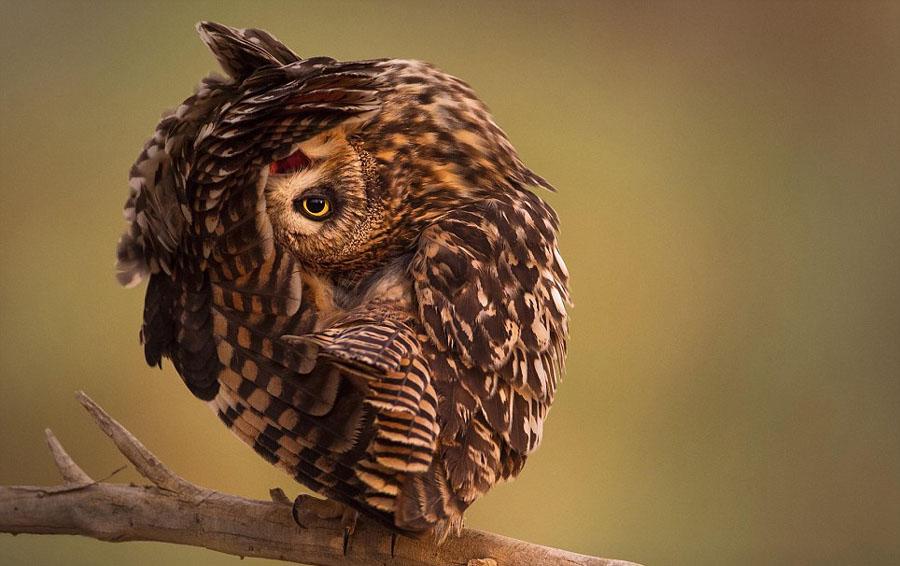 2014年度世界野生动物摄影师大赛入围作品曝光