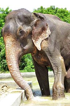 印虐象男子提起诉讼欲夺回被救大象
