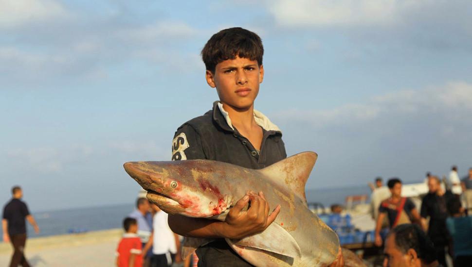加沙停火后巴勒斯坦渔民恢复售卖