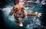 动物摄影:落水狗