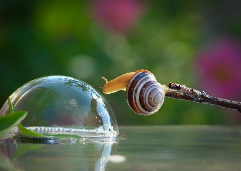动物摄影:蜗牛先生的假期