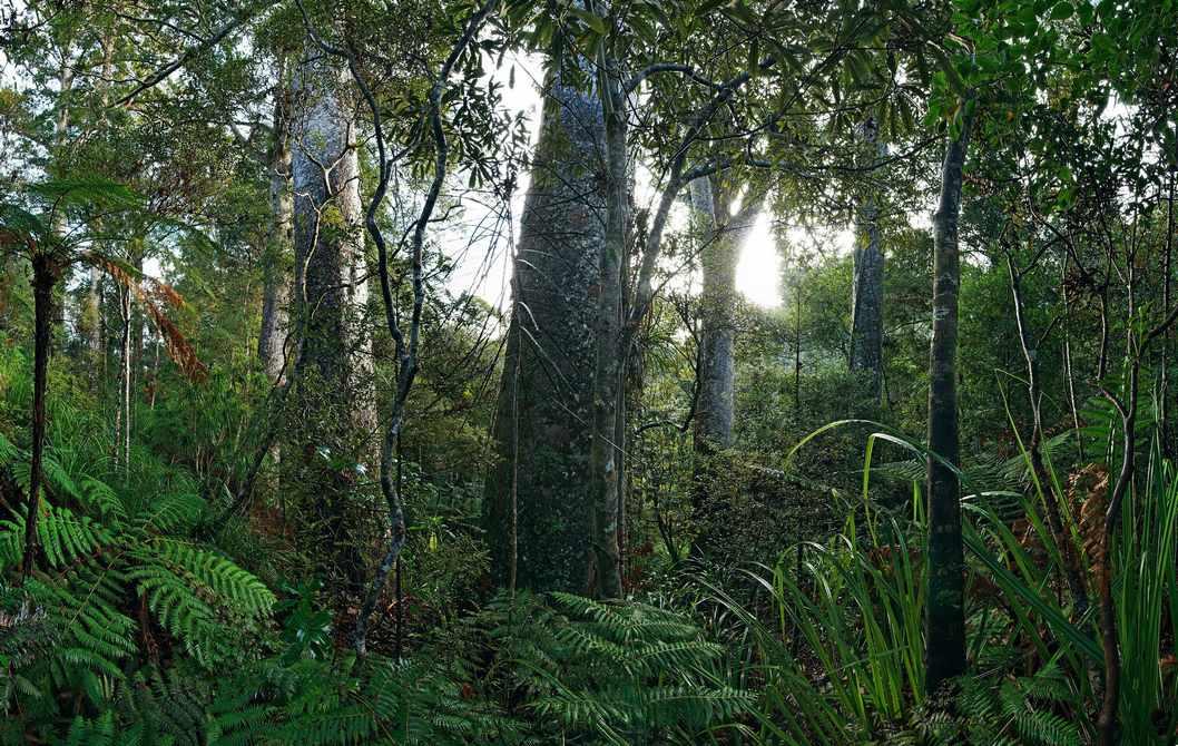 约翰·B·特纳《绿殇-拯救森林》