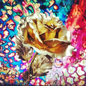 """手机摄影展""""金鱼与玫瑰"""""""