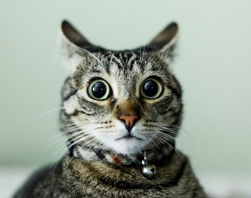 动物摄影:喵星人观察日记