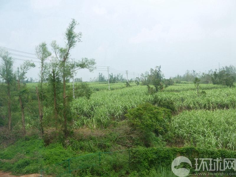 海南演丰红树林:海口吸尘器