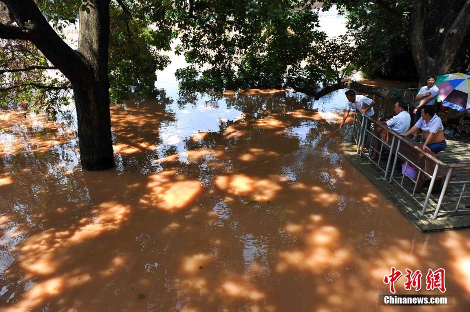 南宁邕江迎洪峰公园被淹 市民水中淡定钓鱼