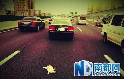 上海曝高架桥扔猫:虐猫组织1次扔30多只(图)