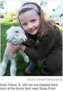 新西兰发现双头羊 两个头四只眼睛几乎同步(图)