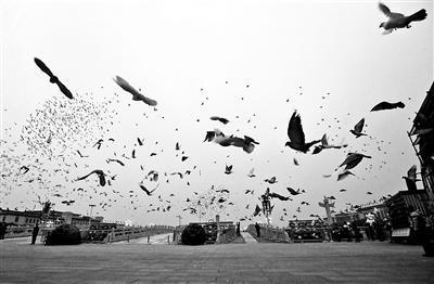 天安门广场放飞万只和平鸽:鸽笼摆放有讲究(图)