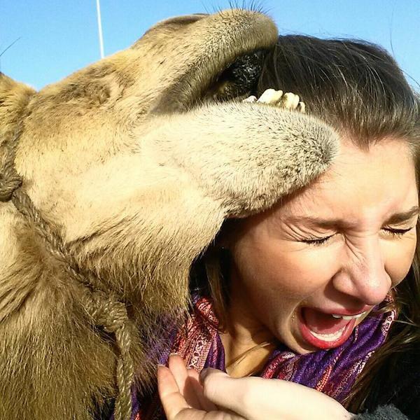 镜头感爆棚的逗逼骆驼
