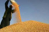 """农储粮每年浪费700亿斤与乡镇粮库""""放荒""""的尴尬何解"""