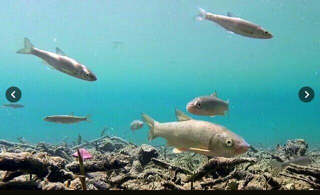 日本摩周湖透明度大幅下降 曾为世界最清湖