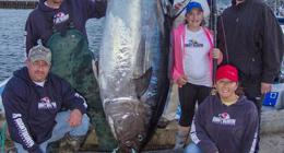 加拿大12岁女孩钓起280公斤巨型金枪鱼