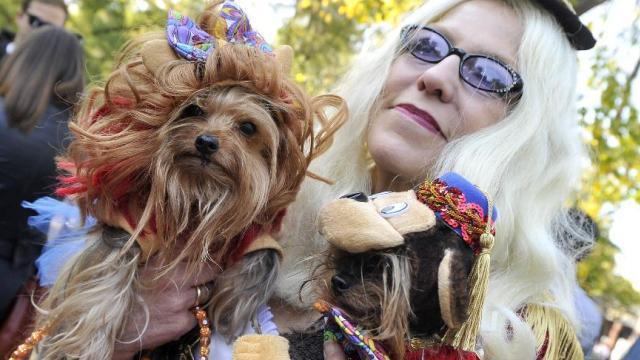 纽约举行宠狗狗着装竞赛游行 迎接万圣节