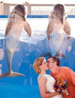 特殊嘉宾!美夫妇海洋馆拍结婚照遭海豚抢镜
