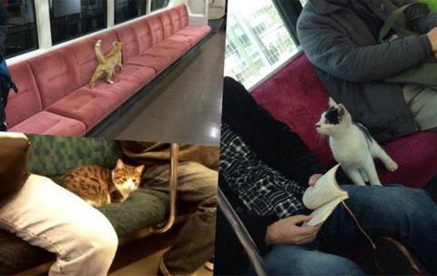 """日本允许流浪猫""""乘""""电车 和谐相处柔软人心"""