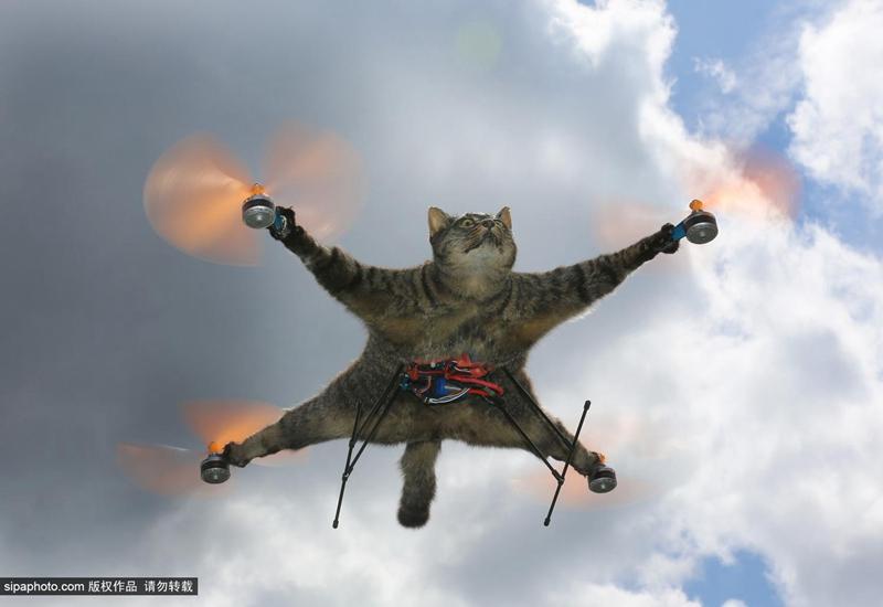 永远飞翔的喵星人:艺术家将死猫制成遥控直升