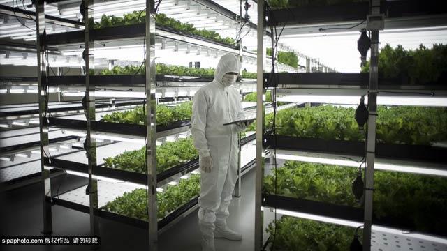 【科技与公益】日本东芝无尘室农场让果蔬更安全