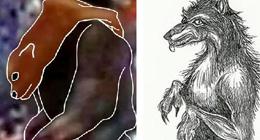美国两州惊现狗头人身怪物 目击者描述