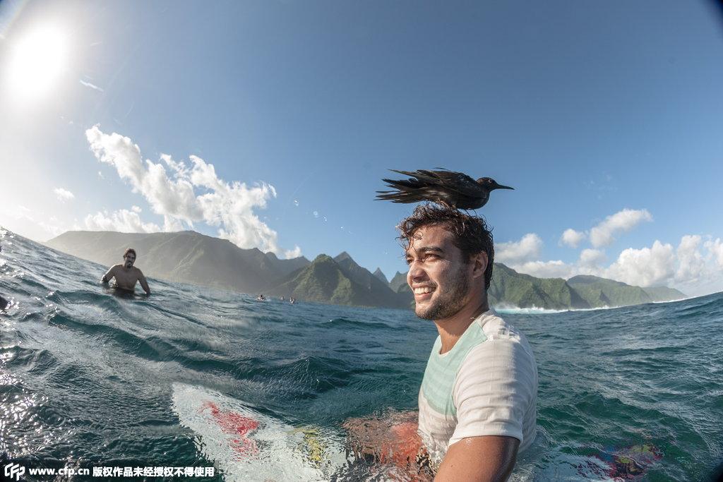头发 冲浪者/2014年11月19日消息(具体拍摄时间不详),南太平洋塔希提岛...