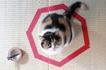 猫咪钟爱圆圈引发探究