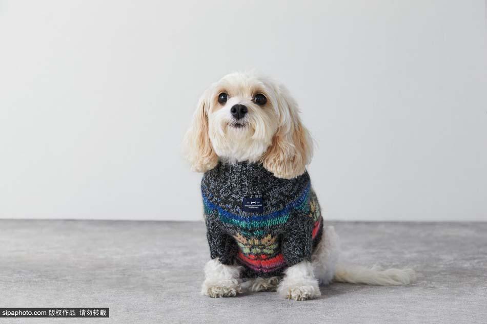 当地时间2014年11月讯,拍摄地点不详,美国品牌American Beagle Outfitters推出了一批狗狗圣诞服装。其实Eagle Outfitters品牌更为大家所熟知,该品牌是亲和力、活力和乐趣的代名词,在美国和加拿大深受年轻一代的青睐。   American Beagle Outfitters本来是一个来自于American Eagle Outfitters(AEO)的愚人节玩笑,但是人们忽然意识到,这真是一个不错的狗狗服饰产品线品牌!