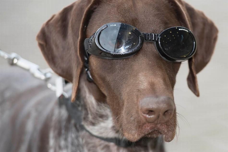 英国皇家空军功勋犬造型炫酷