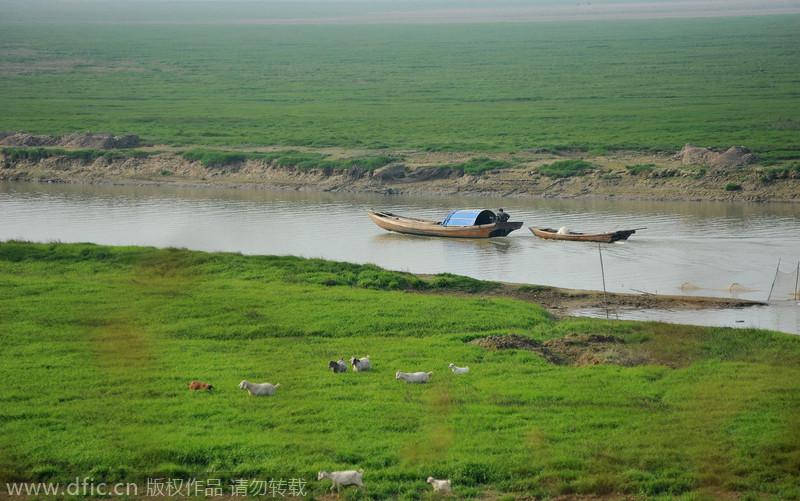 """江西:鄱阳湖进入枯水期 草洲裸露犹如""""塞上草原"""""""