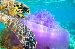 生存之美:世界生物学会年度摄影大赏
