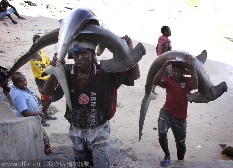 索马里人不当海盗也能丰收