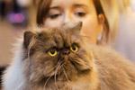 直击2014英国至尊猫展