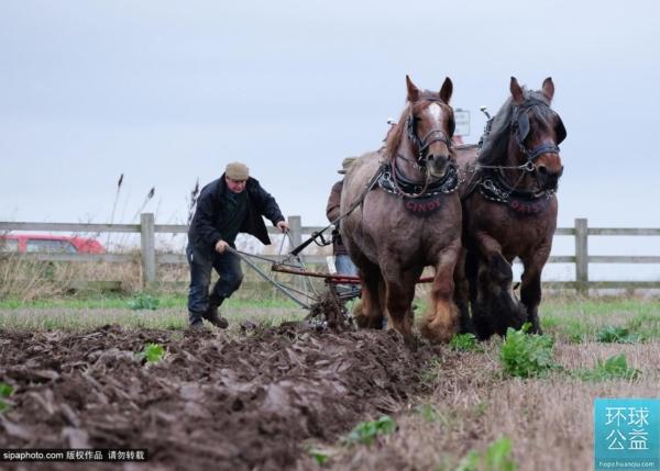 英国年度耕地大赛 农民展技能筹善款两不误