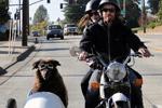 狗狗坐摩托车范气十足