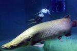 全球能吓死人的巨型鱼类