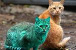 盘点不同寻常的彩色动物