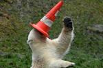德北极熊玩转交通锥