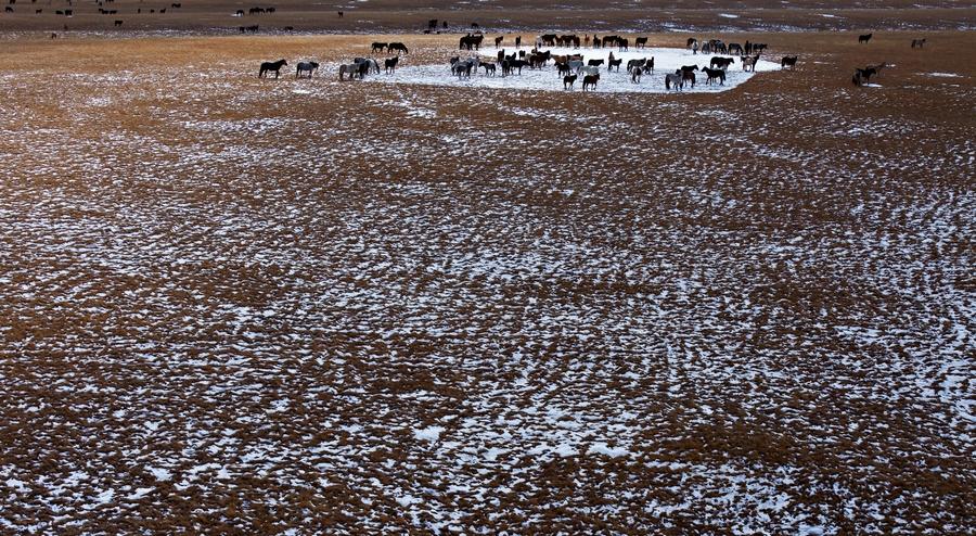 奔腾在巴音布鲁克草原上的马群