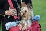 美宠物时尚包风靡全球